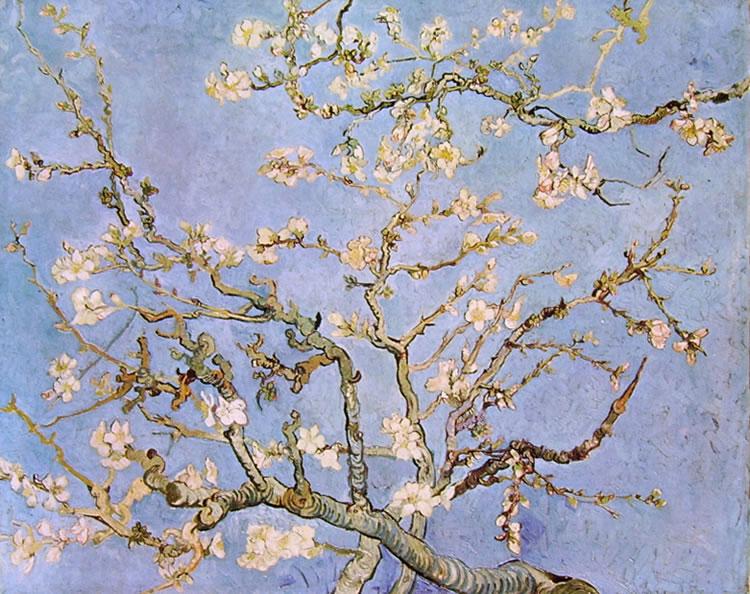 rami-di-mandorlo-in-fiore-769